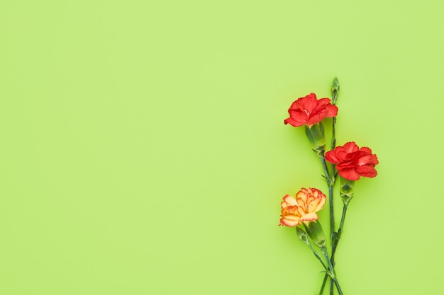 Carnation flowers on green background. mother's day, valentines day, birthday celebration concept