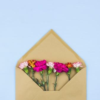Carnation flowers inside of an envelope