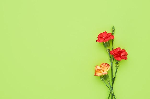 녹색 배경에 카네이션 꽃입니다. 어머니의 날, 발렌타인 데이, 생일 축하 개념