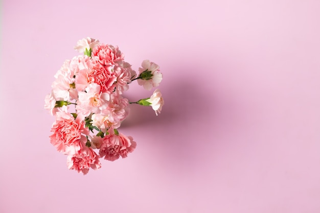 Carnation flowers on pink background, mother's day and valentines day