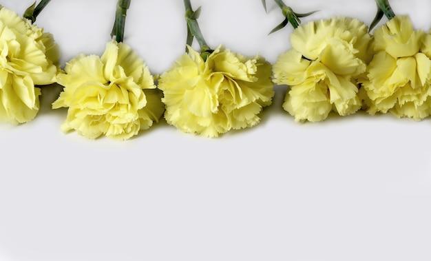 흰색 배경에 고립 된 녹색 잎 카네이션 꽃