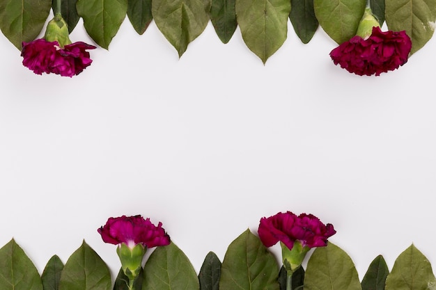 Carnations and leaves composition