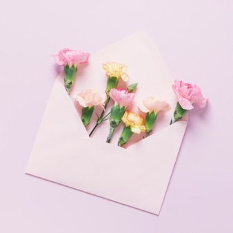 Carnations lying in package