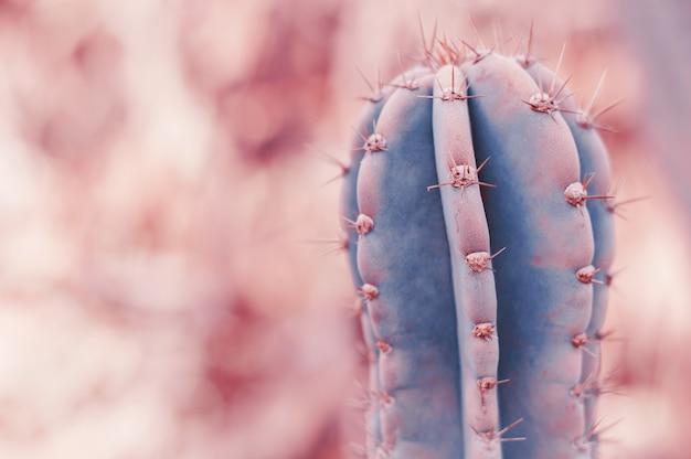 Carnegiea gigantea cactus растение сагуаро тонированное изображение