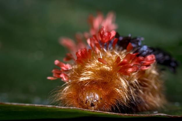 葉の上のカーニバル服を着た毛虫