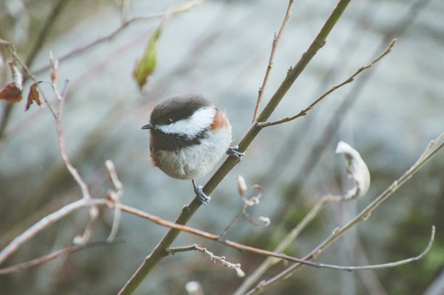 Carolina chickadee sitting on a tree branch surrounded by greenery