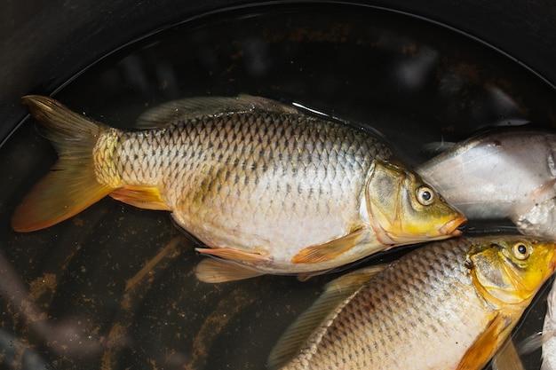 Карп - пресноводная рыба на миске