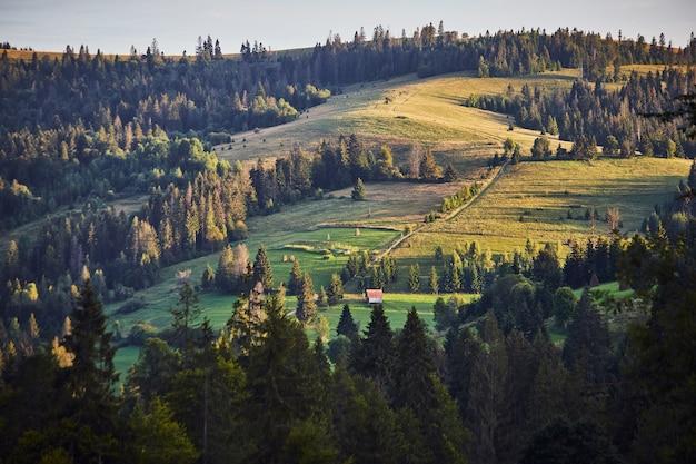 Carpathian landscape of the mountains and forest on sunset,  lviv region of western ukraine