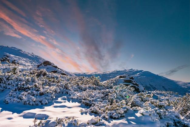 눈처럼 하얀 눈이 드리프트하는 카르파티아 산맥과 언덕과 밝은 태양에 의해 조명되는 상록수