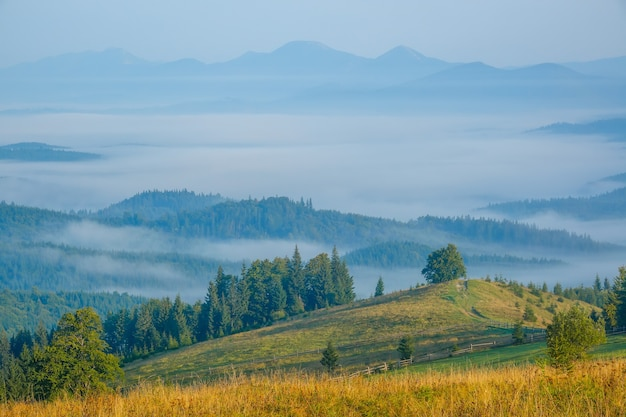 Carpathian mountains covered with forest. summer morning. fog in the valley. blue peaks in the rear plan