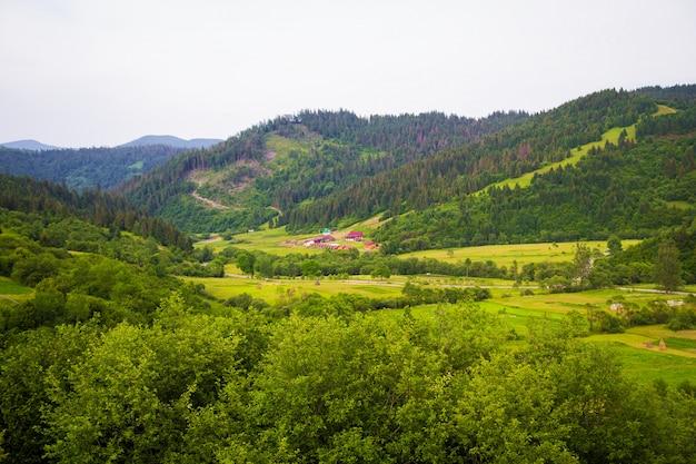 Carpathian nature in summer