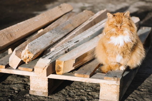 Carpentry concept with cat