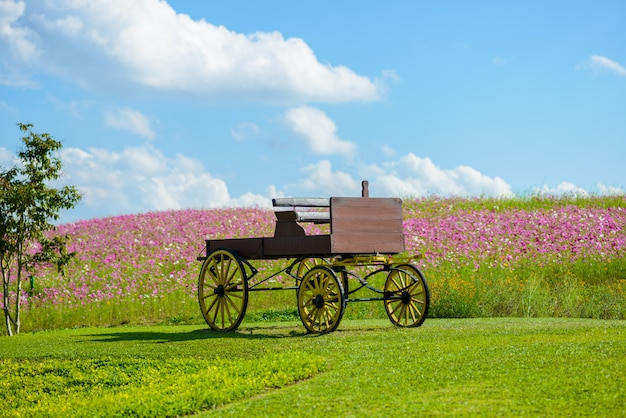 Carriage and cosmos flower in field