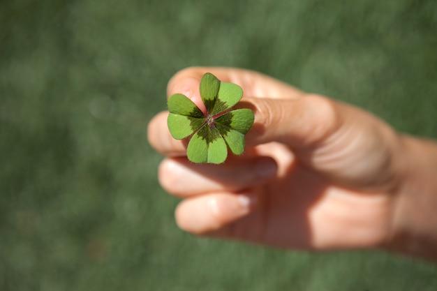 운이 좋은 네 잎 클로버를 들고.