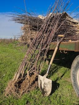 접시로 심을 준비가 된 과일 나무 식물이있는 카트. 농업 개념.