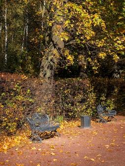 Чугунная скамейка под осенним деревом на тенистой аллее парка.