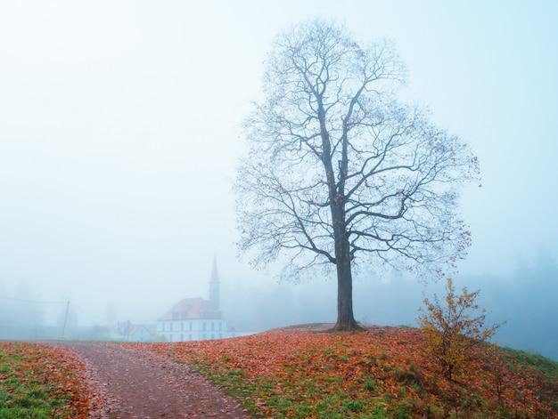 秋の霧の中の城。ガッチナ。ロシア。