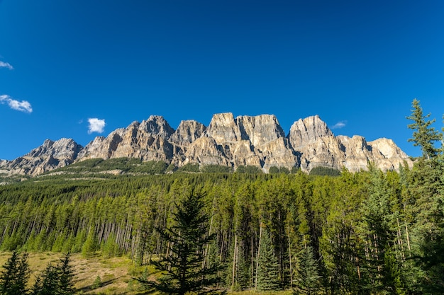 Castle mountain cliff viewpoint in summer sunny day bow valley parkway banff national park canada