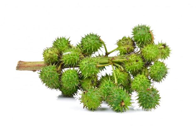 分離されたヒマシ油植物