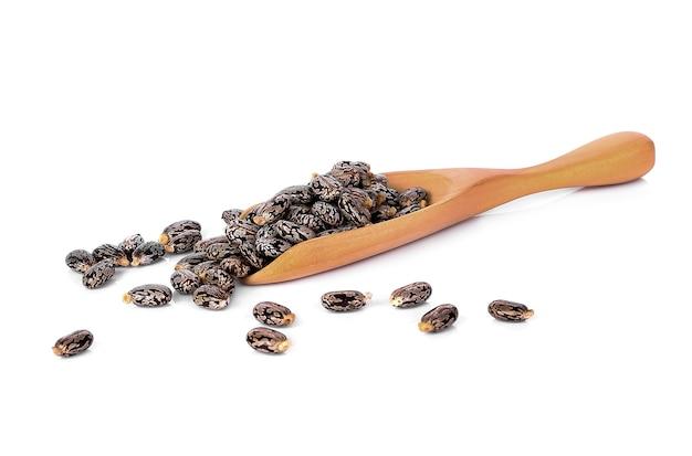 흰색 배경에 고립 된 피마자 기름 씨앗 (ricinus communis)