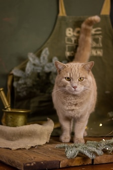 猫とクリスマス休暇クリスマスの装飾