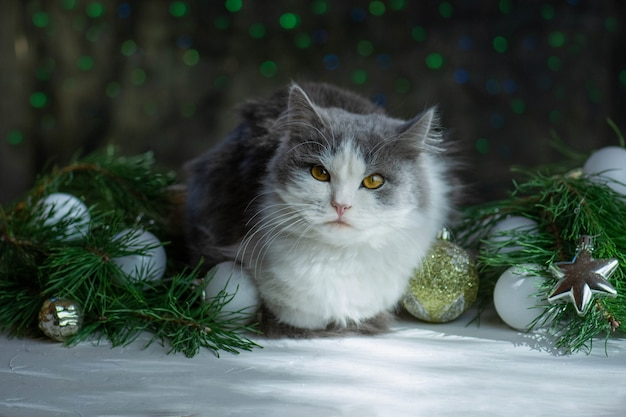 クリスマスライトのボケ味の背景を持つ猫とクリスマスのおもちゃ