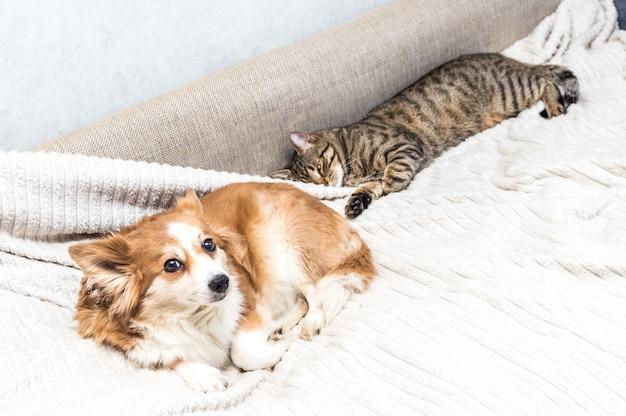 Кошка и собака вместе лежат на кровати. концептуальные домашние животные.