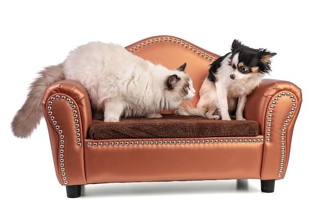 肘掛け椅子の猫と犬