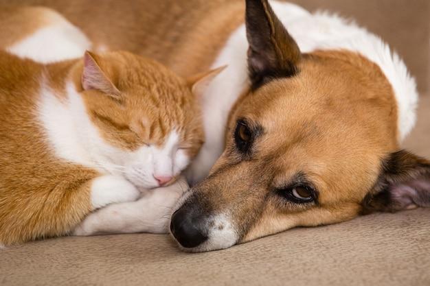 一緒に休んでいる猫と犬。親友。