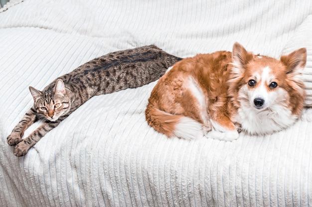 Кошка и собака спят вместе на кровати дома. закрыть вверх