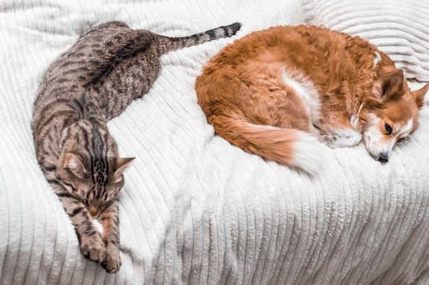 Кошка и собака спят вместе на кровати дома. концепция расслабиться