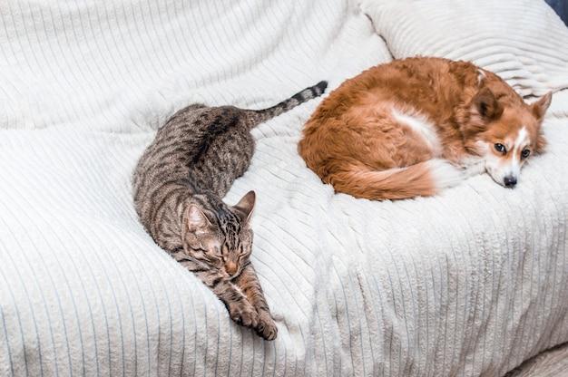 Кошка и собака спят вместе на кровати дома. концепция дружбы