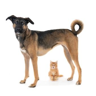 猫と犬を一緒に。雑種犬の下に座っている生姜の子猫。