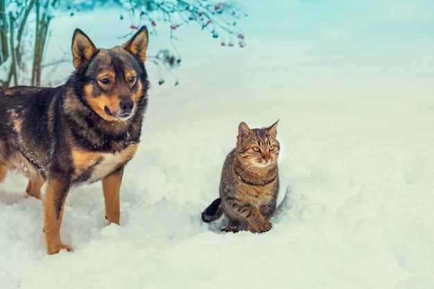 雪の降る冬に一緒に歩く猫と犬