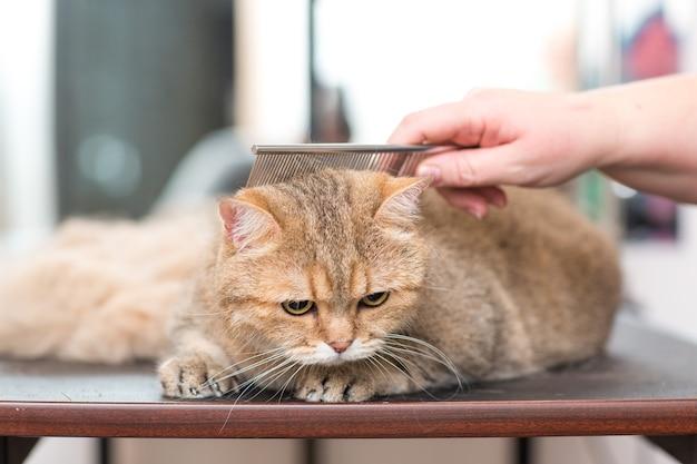 ビューティーサロンでの猫とペットのグルーミング。