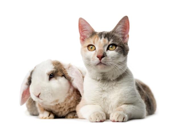 白い壁の前で猫とウサギ