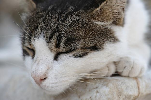 Кошка спит на передних ногах