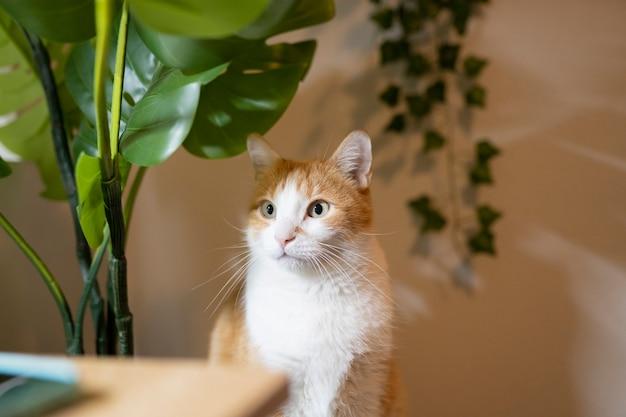 야자수 식물이 있는 집에 있는 고양이