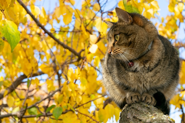 Cat in the autumn sits on a tree with yellowed leaves in the garden