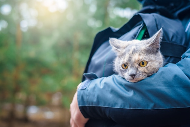 Cat in a backpack sits at the man. walk with your pet in the woods.