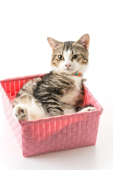 Gatto in cesto