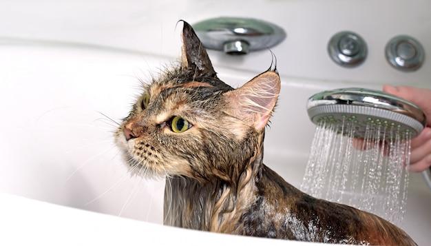 Кошачья ванна