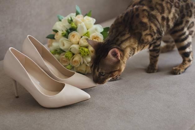 Кошка невеста с букетом и туфлями