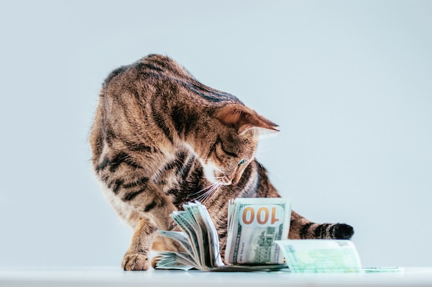 Cat on a of a bundle of money. animal donation concept