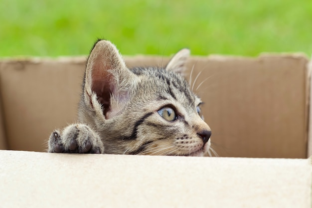 Cat in cardboard box on green background