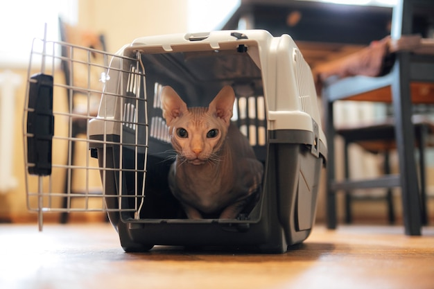 Cat in a carrier animal journey