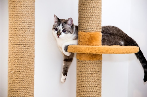 A cat in a cat house. the cat is resting in his house.