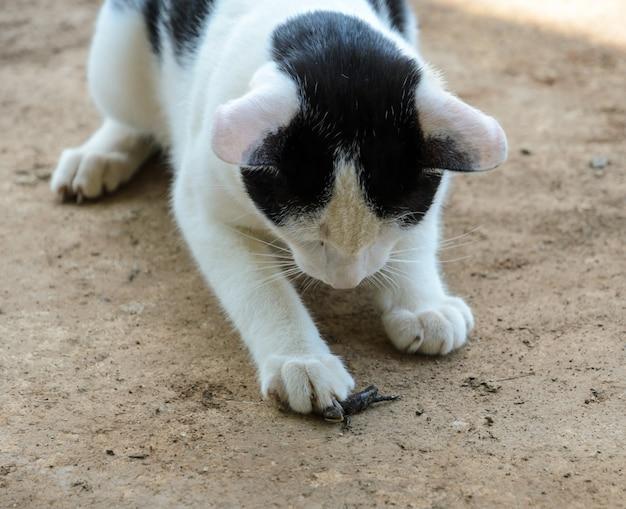 敷地内でトカゲを捕まえる猫