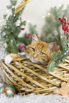 Cat and christmas holidays christmas decor