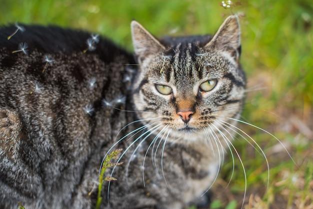 Кошка покрыта семенами в поле одуванчиков
